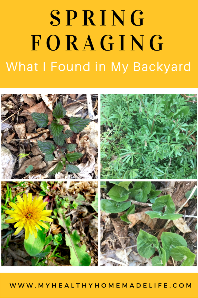 Spring Foraging for Wild Edibles -- What I Found in My Backyard | My Healthy Homemade Life