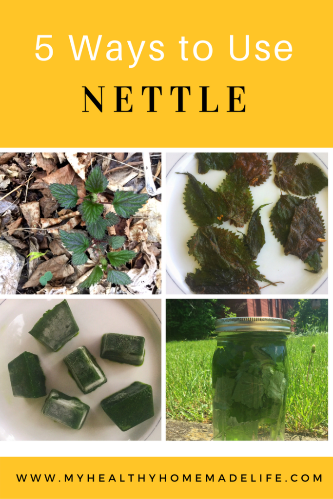 Spring Foraging | 5 Ways to Use Stinging Nettle | Herbal Tea | Wilted Nettle Greens | Nettle Chips | Hair Rinse | Herbs | Healthy Recipes | DIY | My Healthy Homemade Life