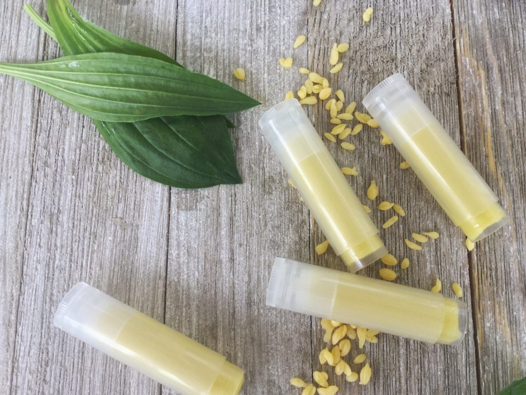 Spring Foraging   5 Ways to use Plantain Herb   Herbs   Herbal DIY   Healthy Recipes   Vegetable Broth   All Purpose Salve   Bug Bite Stick   Home Remedy   Poultice   Facial Toner   My Healthy Homemade Life