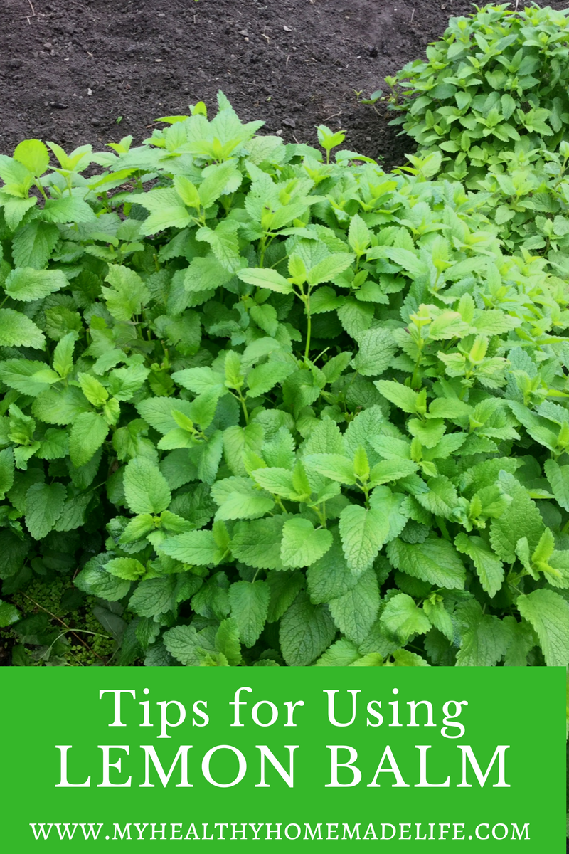 How to Use Lemon Balm for Stress, Tension and Anxiety - My Healthy