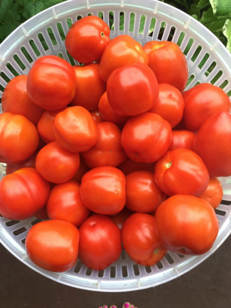 How To Make The Best Homemade Salsa With Fresh Tomatoes For Canning